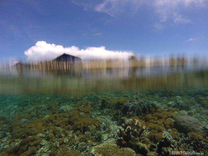 Arborek é linda dentro e fora d'água