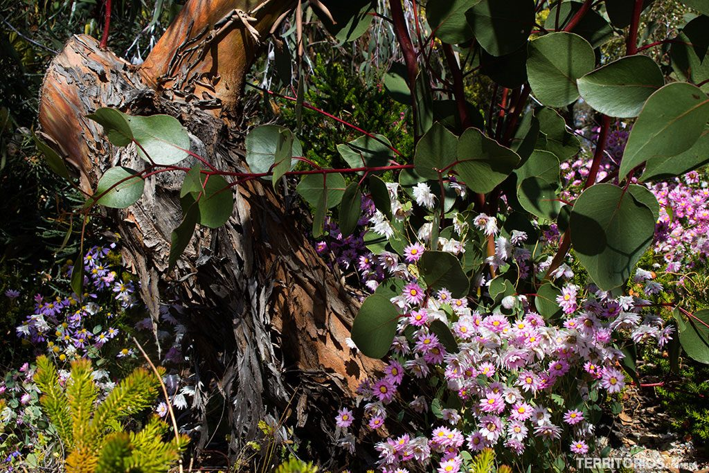 Primavera na Western Australia