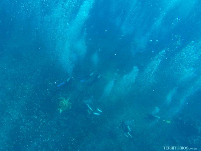 Vi tartaruga e mergulhadores no fundo enquanto fazia snorkel
