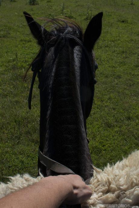Montada na Morena, égua famosa por ter aparecido em filmes internacionais. Até Katy Perry já andou