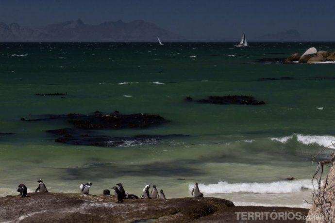 Não é a toa que os pinguins passam o ano todo em Cape Town
