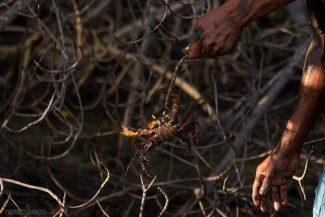 Demonstração com o caranguejo