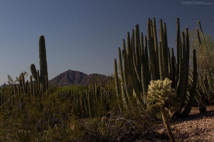 parque no Arizona
