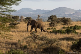 Melhores fotos da viagem ao Quênia