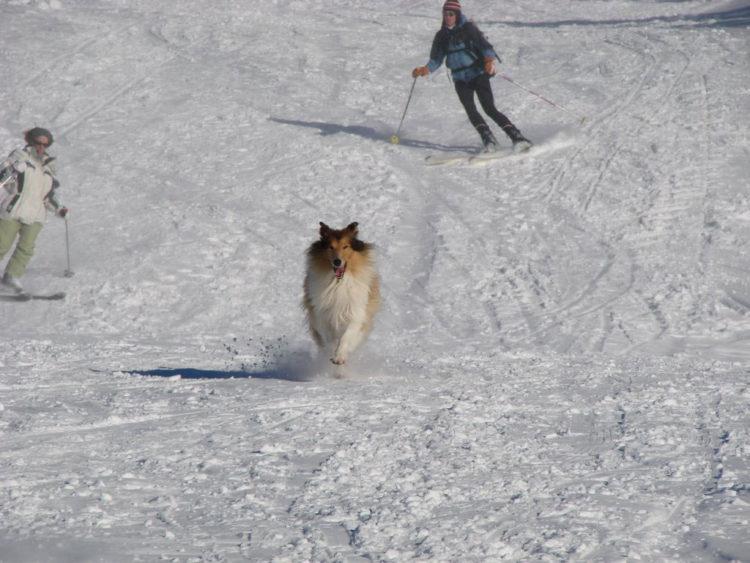 Cachorro na neve, Alpes