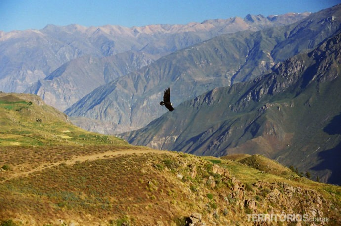 O voo do condor