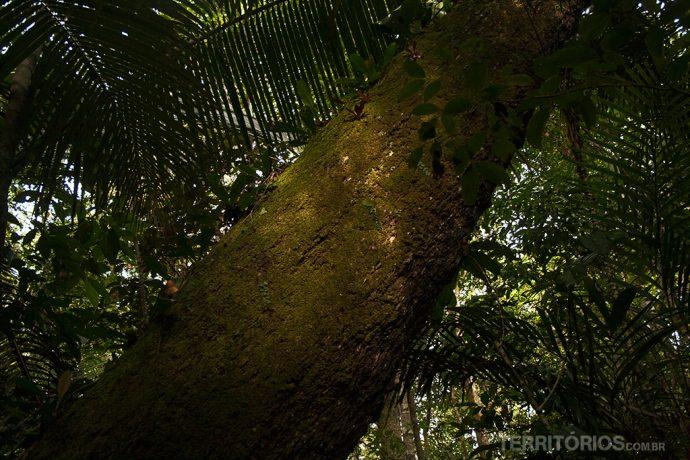 Região próxima a Autazes na Floresta Amazônica, Amazonas - Brasil