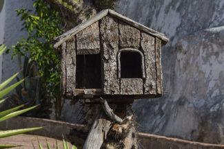 Casa de passarinho feita com cactos