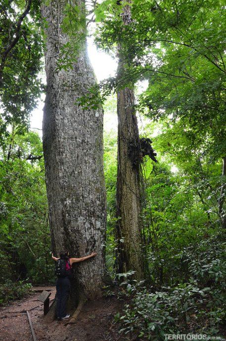 Abraçada em árvore gigante