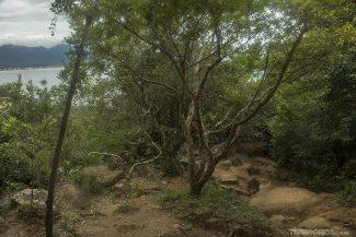 Início da trilha saindo da Pinheira