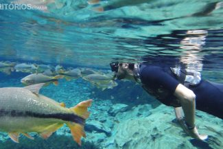 Os peixes não se deixam tocar, mas chegam muito perto