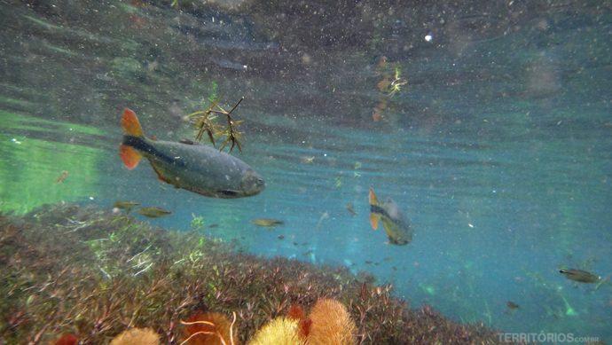 Aquário Natural é a mais colorida das flutuações
