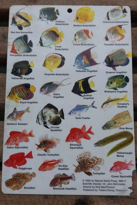 Peixes encontrados no Mar Vermelho