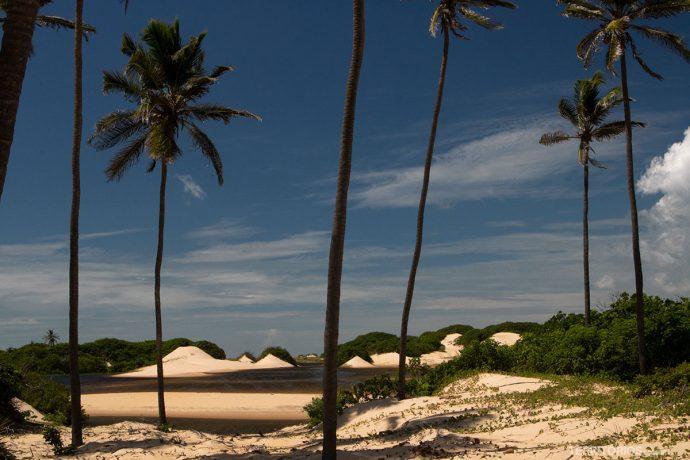 Cenário tem vegetação rasteira, areia e coqueiros