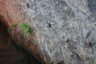 Aranhas na pedra