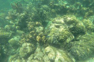 Snorkel em Islamorada