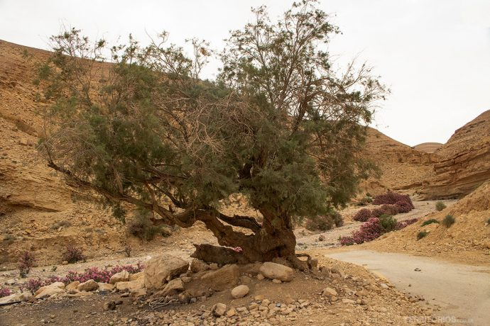 Fim da estrada, início da trilha Wadi El Ghuweir