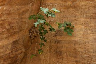 Vegetação nasce da pedra