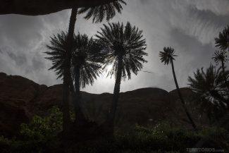 Oásis no deserto da Jordânia