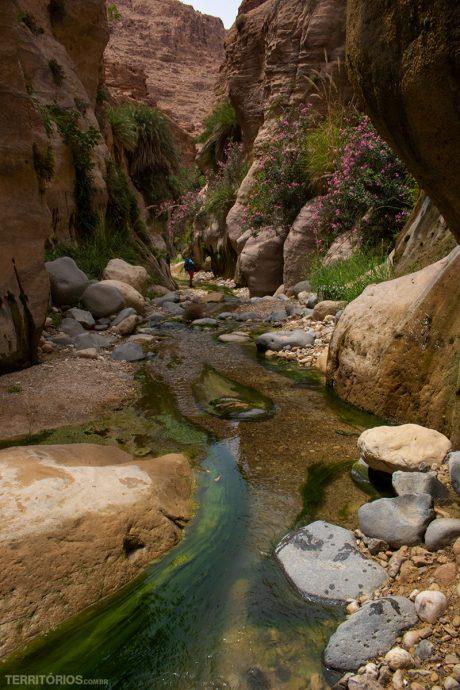 Caminhos coloridos no curso do rio