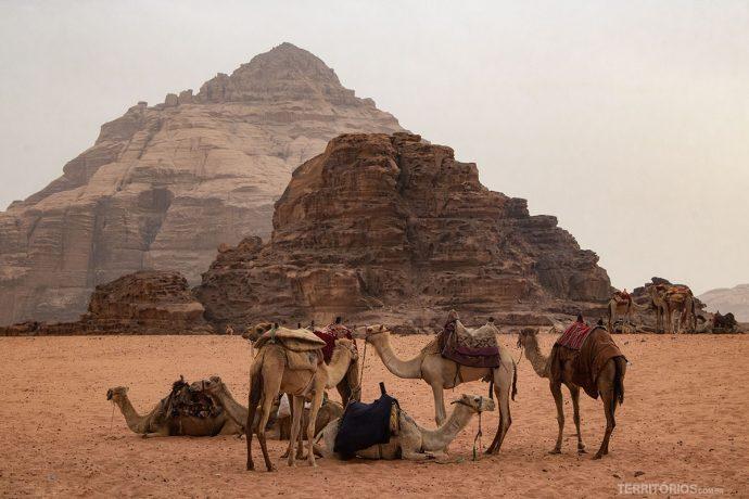 Camelos disponíveis para passeio
