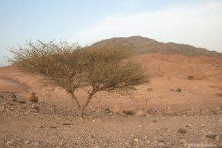 Reserva da Biosfera Dana,