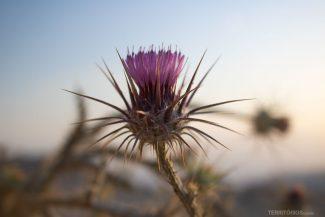 Flor nas cores do pôr do sol de Dana