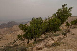 Verde no deserto de Dana