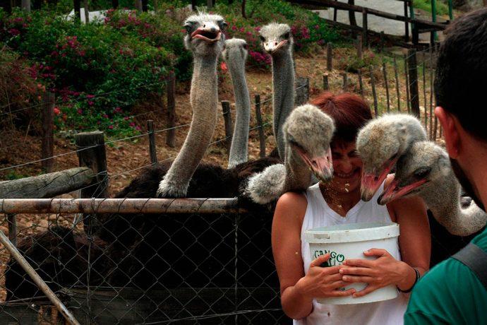 Imagina se a avestruz prefere beliscar o meu olho