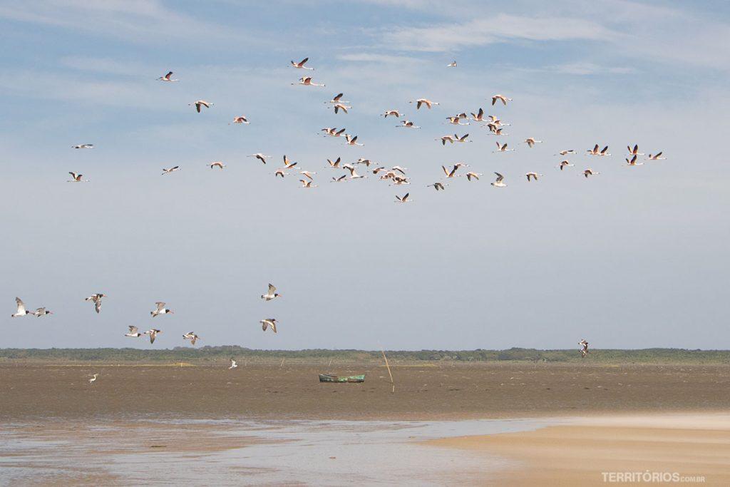 Flamingos vindos do Chile
