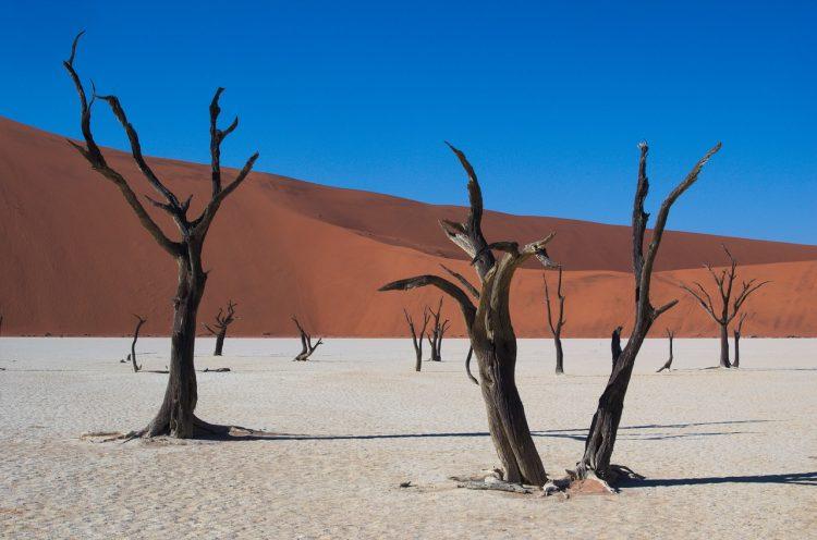 Viagem dos Sonhos na Namíbia