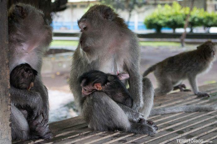 Floresta dos Macacos em Bali