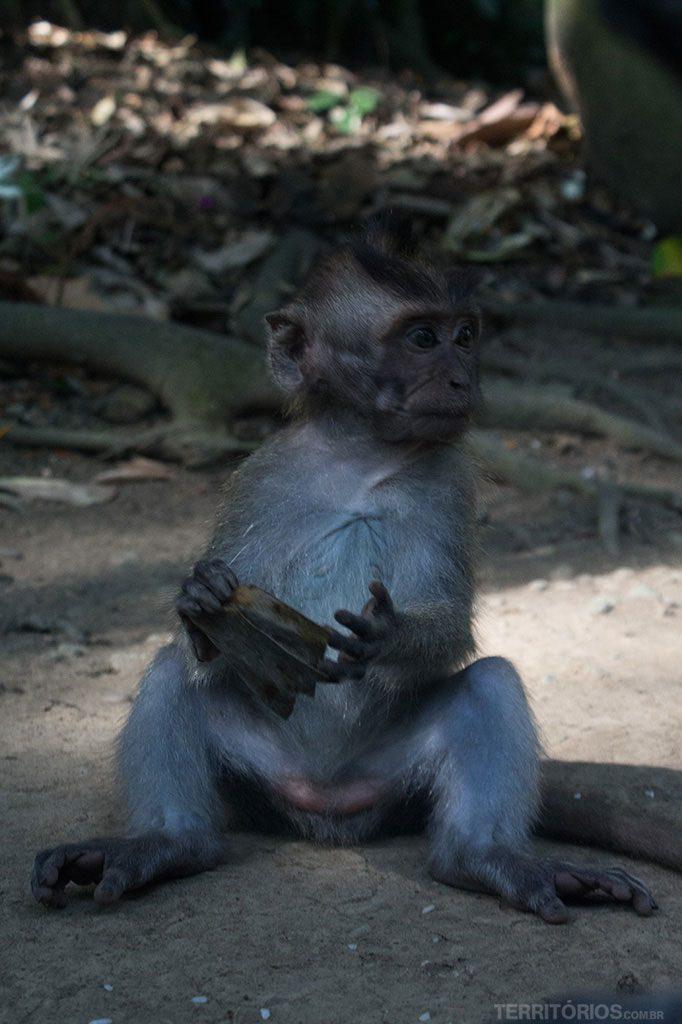 Filhote de macaco