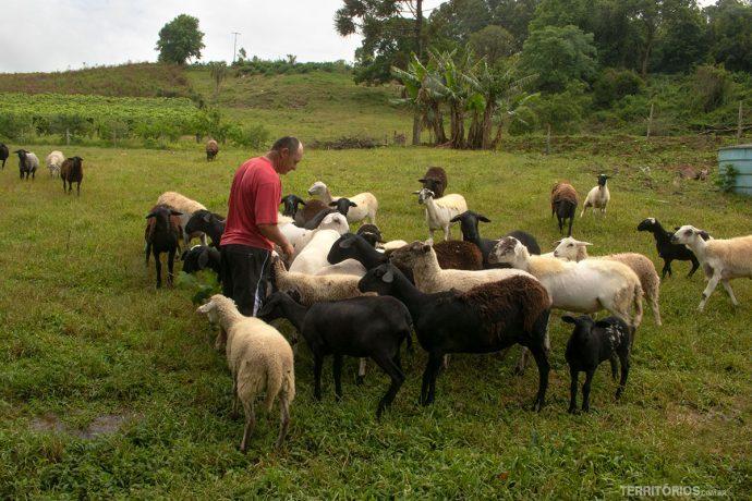Homem com ovelhas na zona rural do Rio Grande do Sul