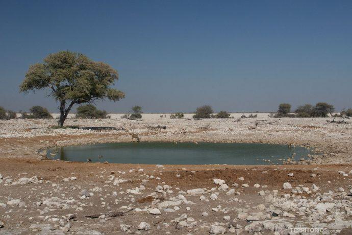Paisagem do Parque Nacional Etosha com lago