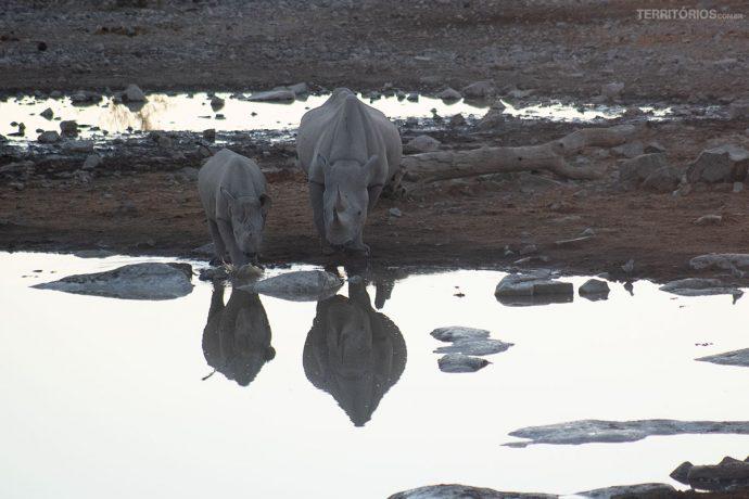 Filhote e mãe rinoceronte no lago