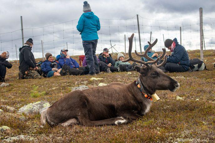 Pausa para o fika nas montanhas Idre, em Dalarna