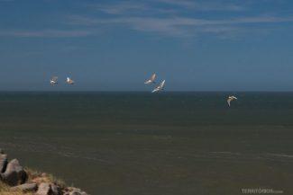 Aves na costa do Oceano Atlântico