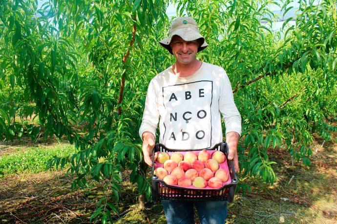 Fabiano de Bortoli é produtor de pêssegos em Pinto Bandeira