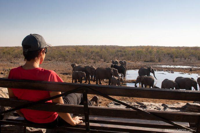 Safari em Etosha em camping na Namíbia